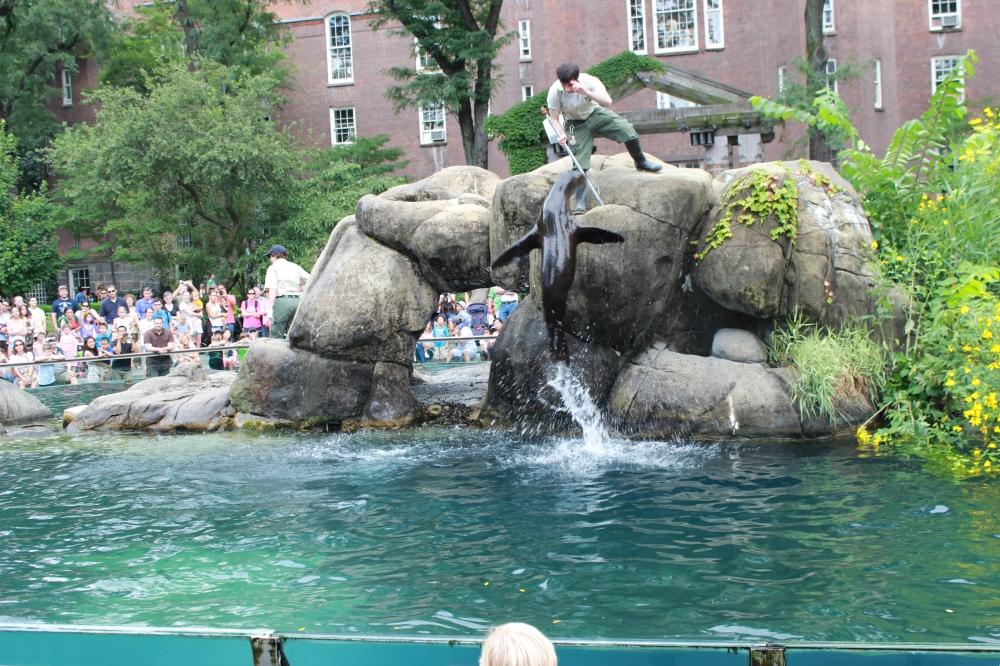 Zoo NY